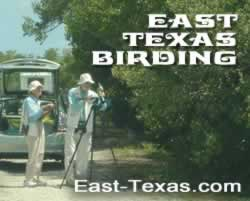 East Texas birds, birding, birdwatching