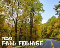 Fall Foliage trips and tours in Texas in 2020