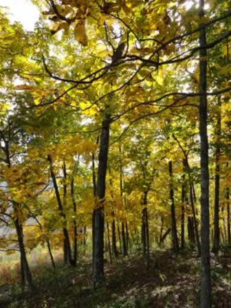 The beautiful yellow fall foliage colors near Kilgore in East Texas