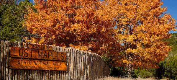 Fall scene at Lost Maples State Natural Area in Texas