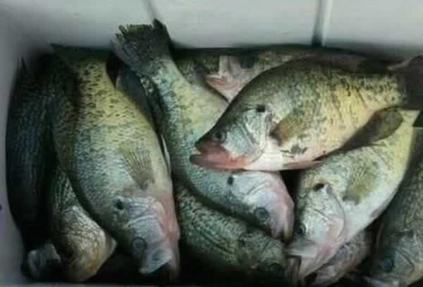 A good day of Crappie fishing at Lake Strike